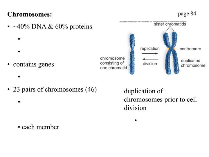 Chromosomes: