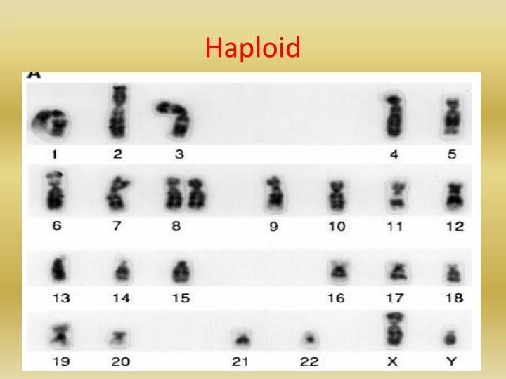 Haploid