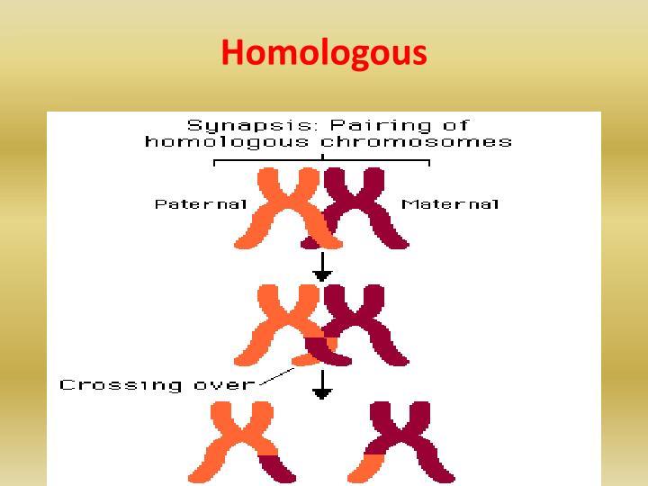Homologous