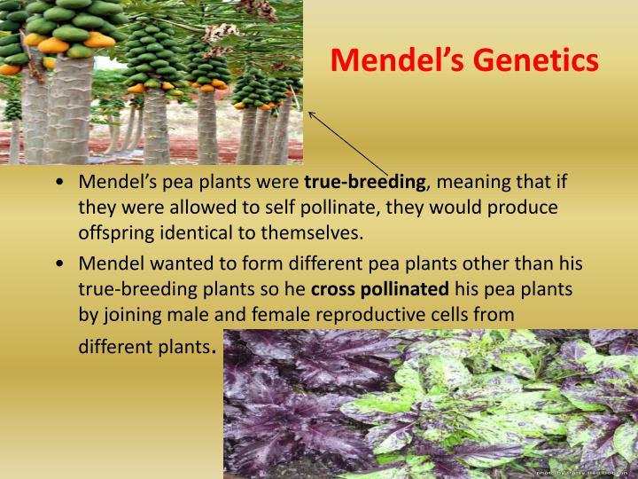 Mendel's Genetics