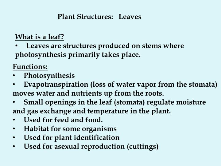 Plant Structures:   Leaves