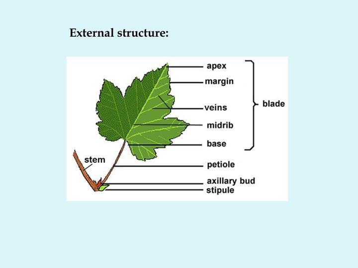 External structure: