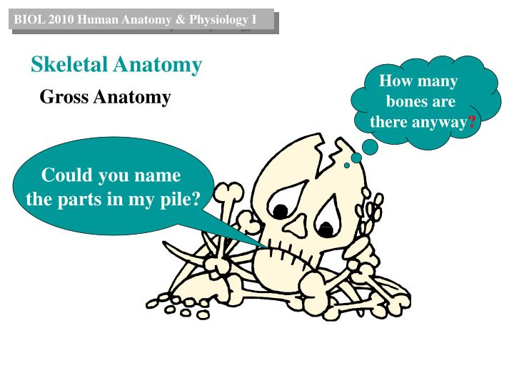 University of michigan anatomy website