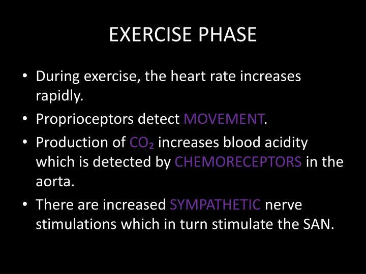 EXERCISE PHASE