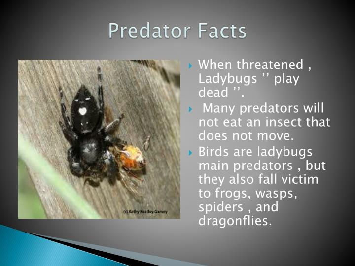 Predator Facts