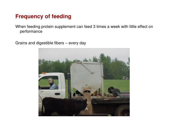 Frequency of feeding