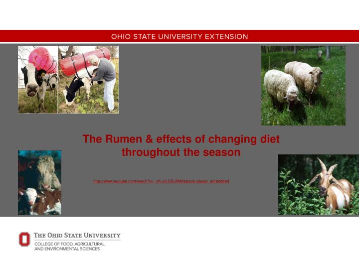 The rumen effects of changing diet throughout the season