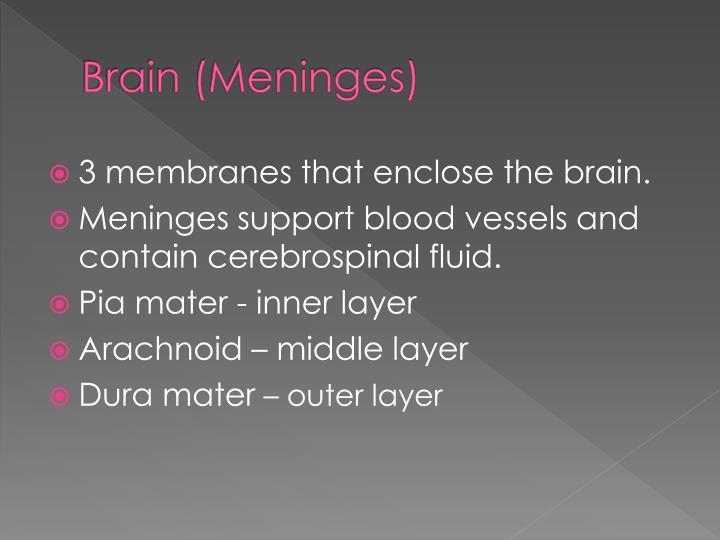 Brain (Meninges)