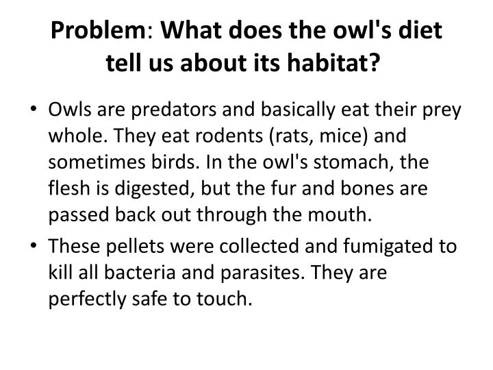 Problem what does the owl s diet tell us about its habitat
