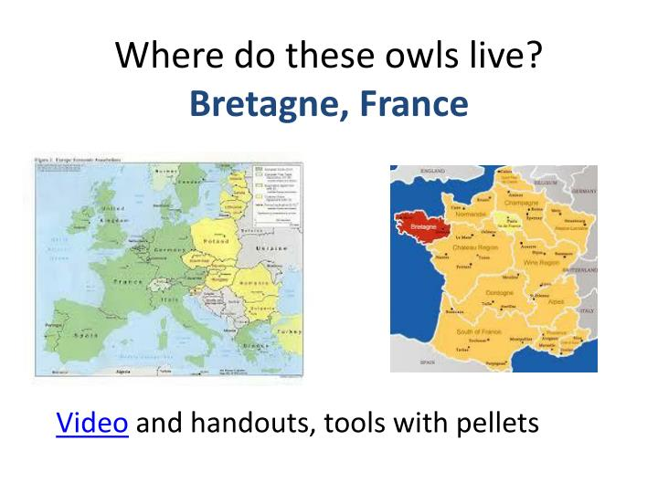 Where do these owls live?
