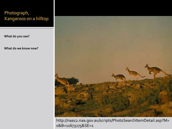 Photograph, Kangaroos on a hilltop
