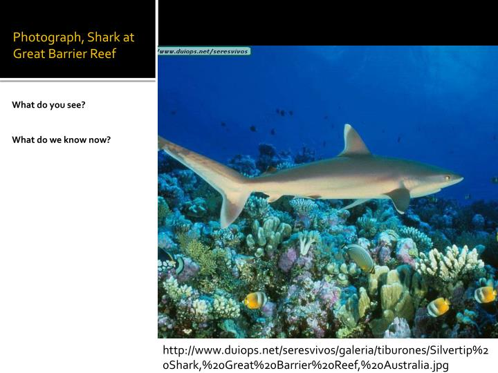 Photograph, Shark at Great Barrier Reef