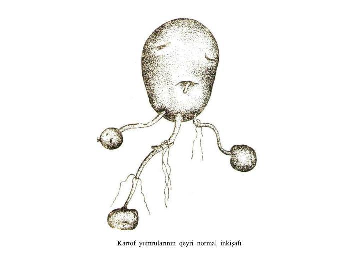 Kartof  yumrularının  qeyri  normal  inkişafı