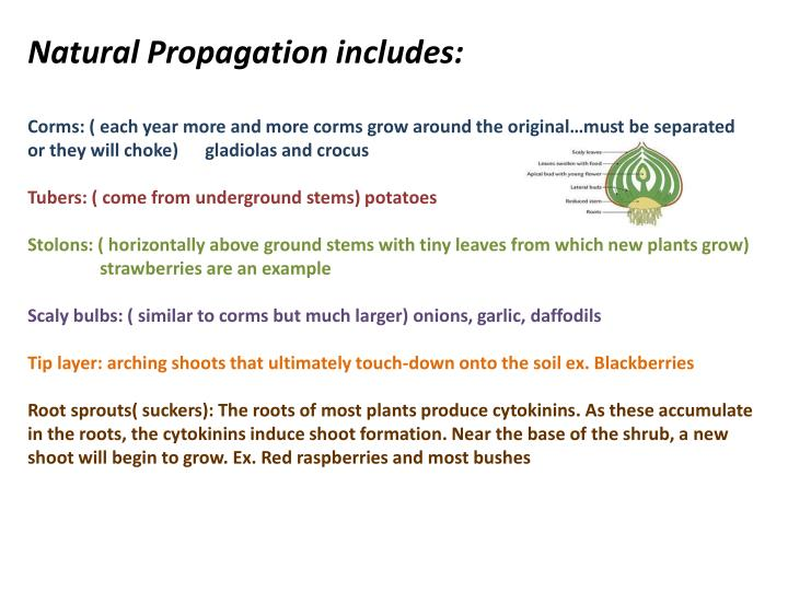 Natural Propagation includes: