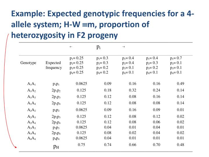 Example: Expected genotypic frequencies for a 4-allele system; H-W