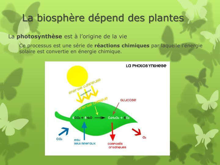 La biosphère dépend des plantes
