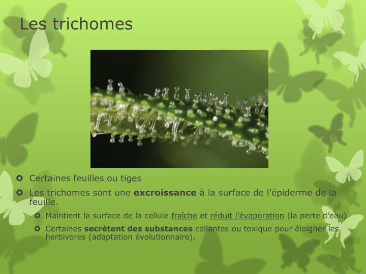 Les trichomes