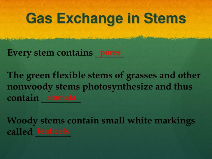 Gas Exchange in Stems