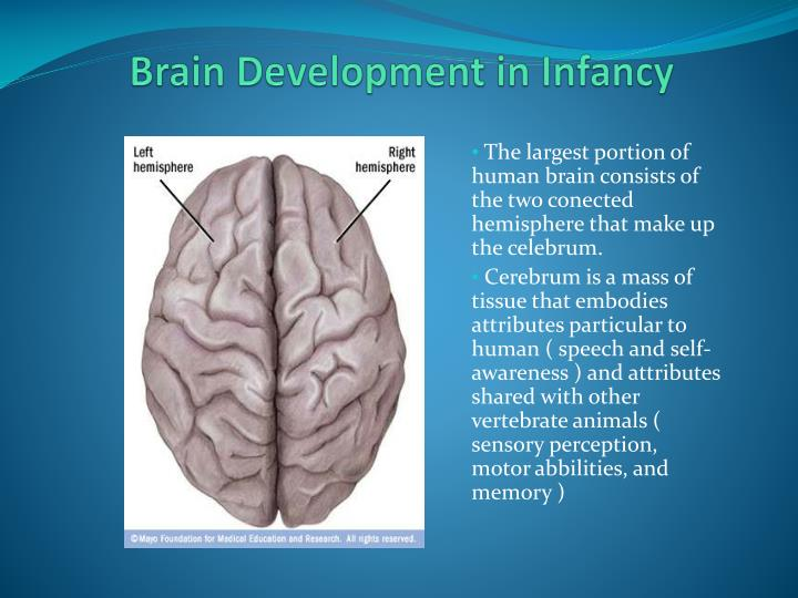 Brain Development in Infancy