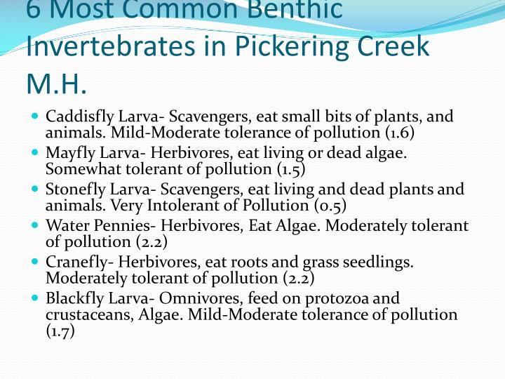 6 Most Common Benthic Invertebrates in Pickering