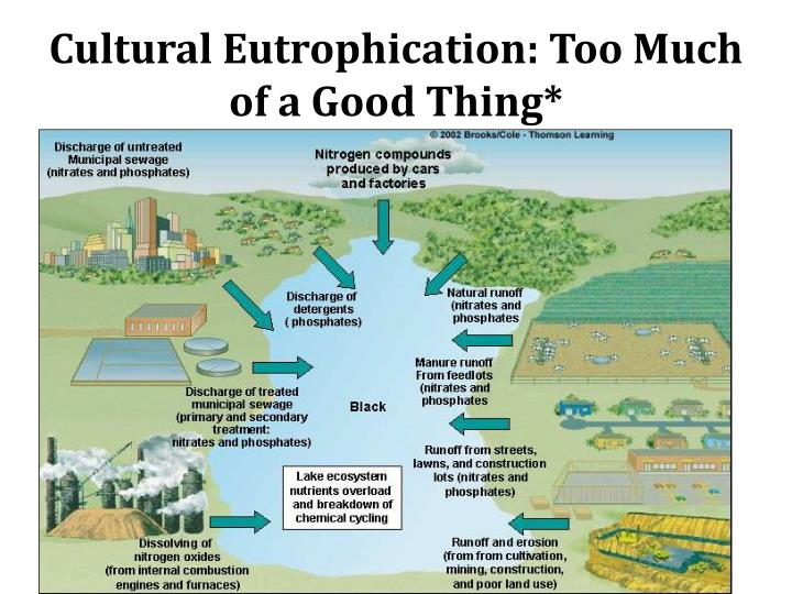 Cultural Eutrophication: Too