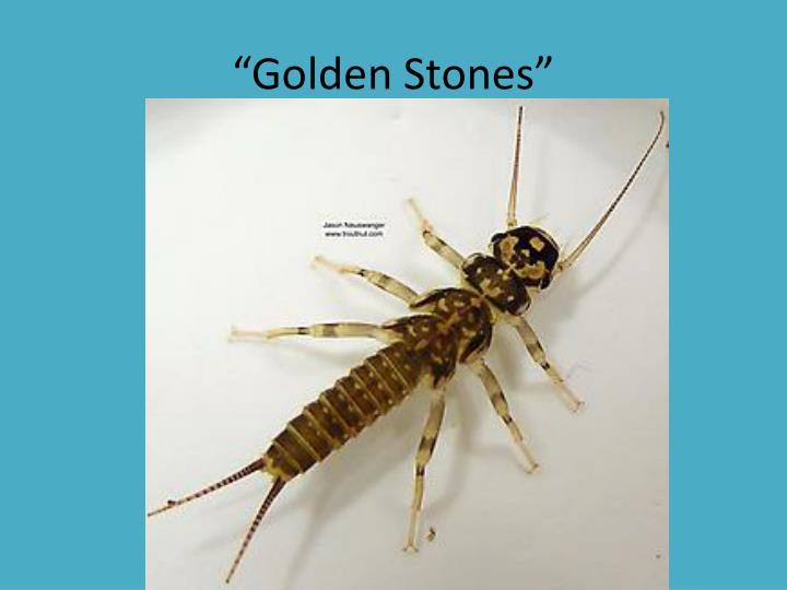 """""""Golden Stones"""""""