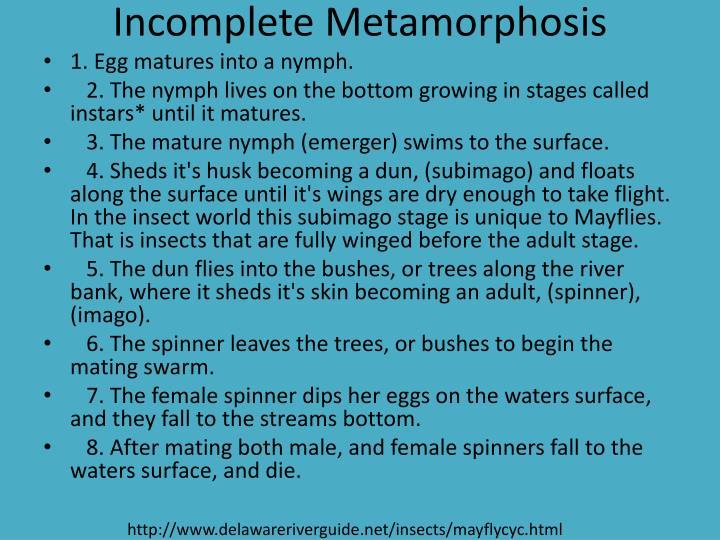 Incomplete Metamorphosis