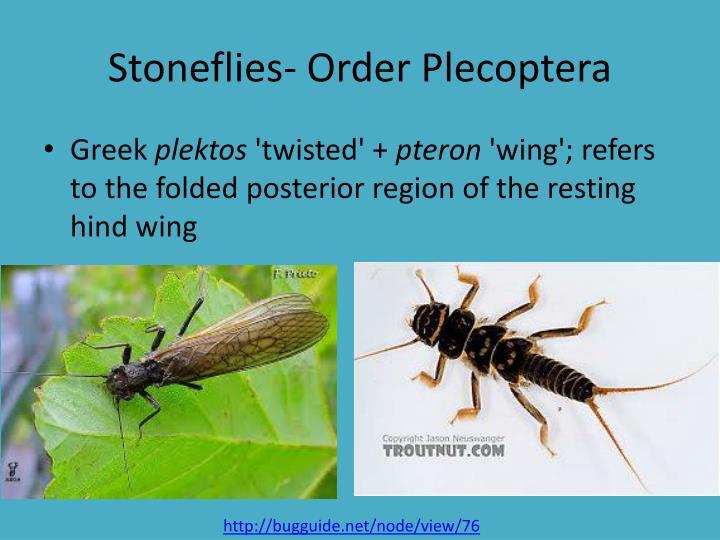 Stoneflies- Order