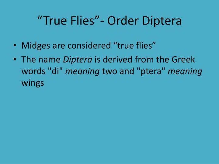 """True Flies""- Order"
