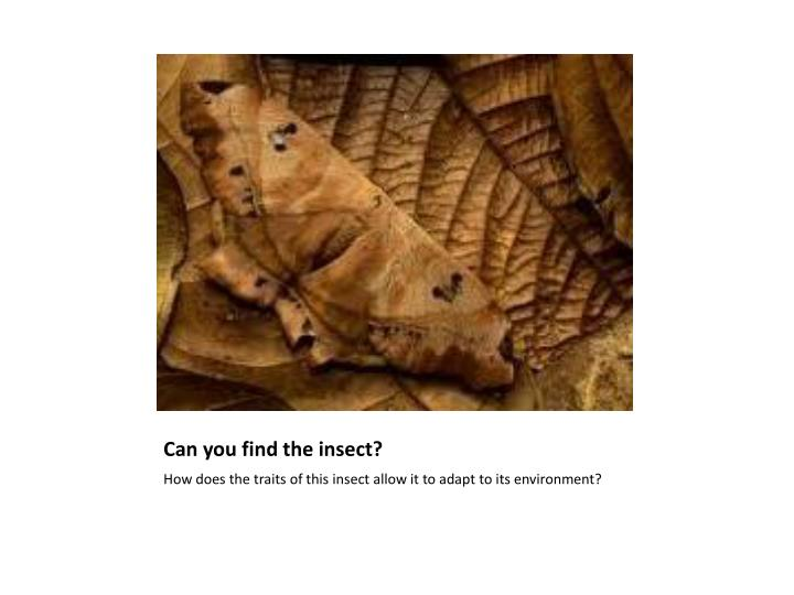 Can you find the insect?
