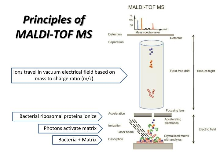 Principles of MALDI-TOF MS
