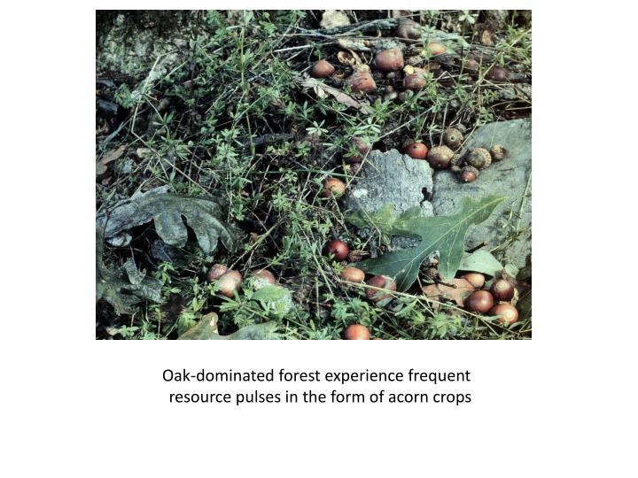 Oak-dominated forest experience frequent