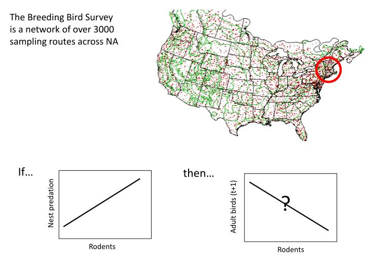 The Breeding Bird Survey