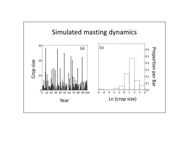 Simulated masting dynamics