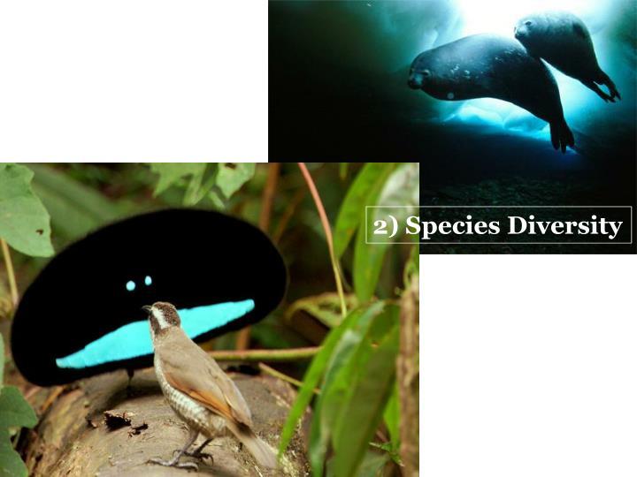 2) Species Diversity