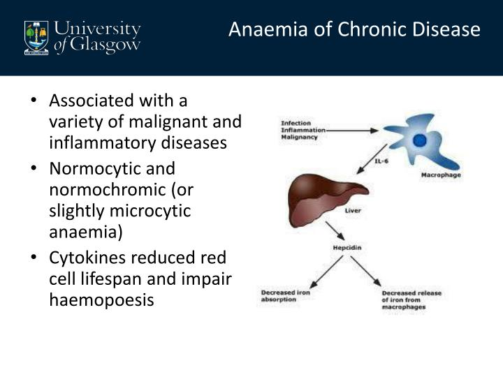Anaemia of Chronic Disease