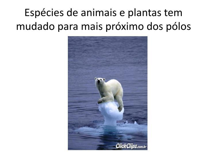 Espécies de animais e plantas tem mudado para mais próximo dos pólos
