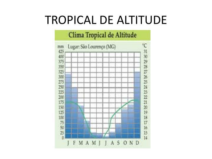 TROPICAL DE ALTITUDE