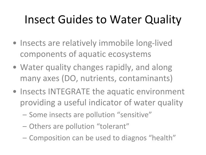 Insect Guides to Water Quality