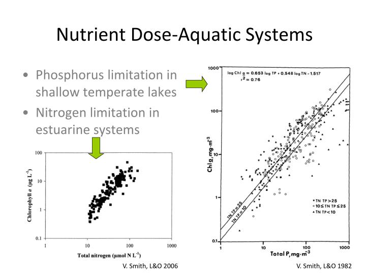 Phosphorus limitation in shallow temperate lakes