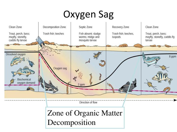 Zone of Organic Matter Decomposition
