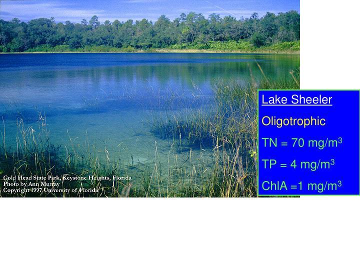 Lake Sheeler