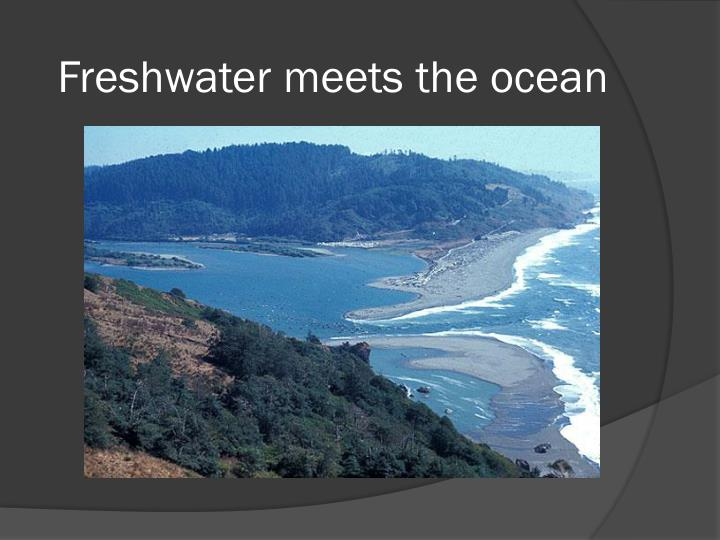 Freshwater meets the ocean
