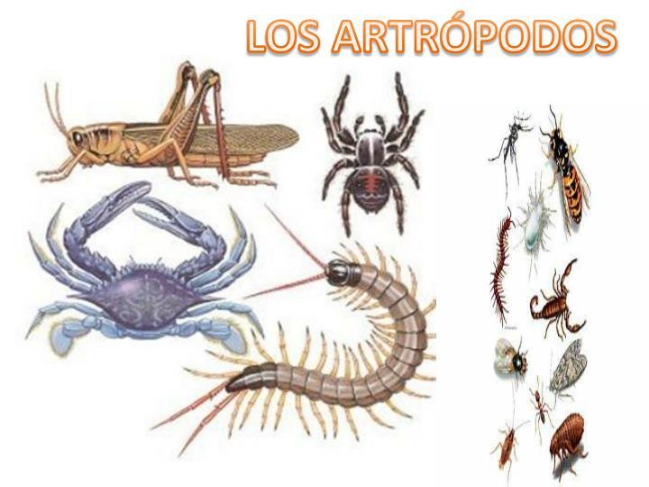 LOS ARTRÓPODOS