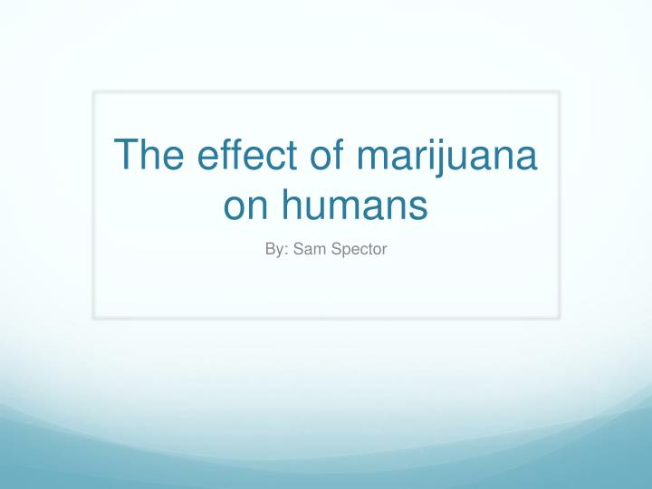 The effect of marijuana on humans