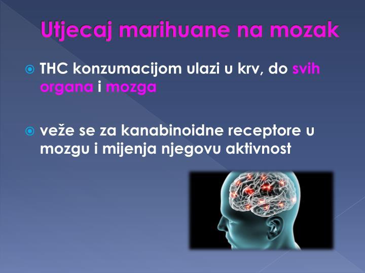 Utjecaj marihuane na mozak