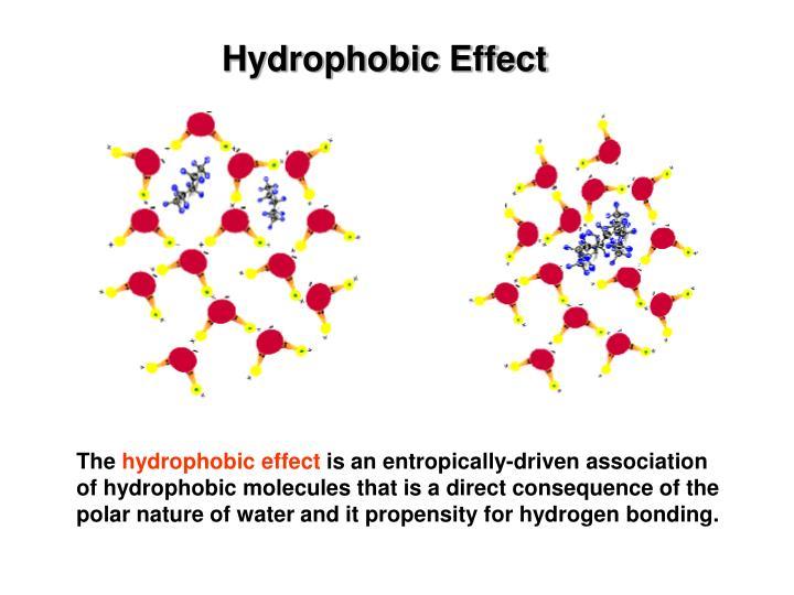 Hydrophobic Effect