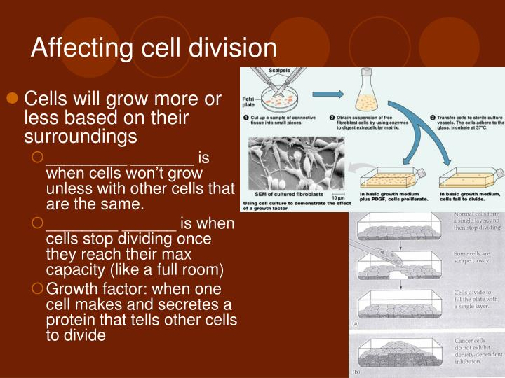 Affecting cell division