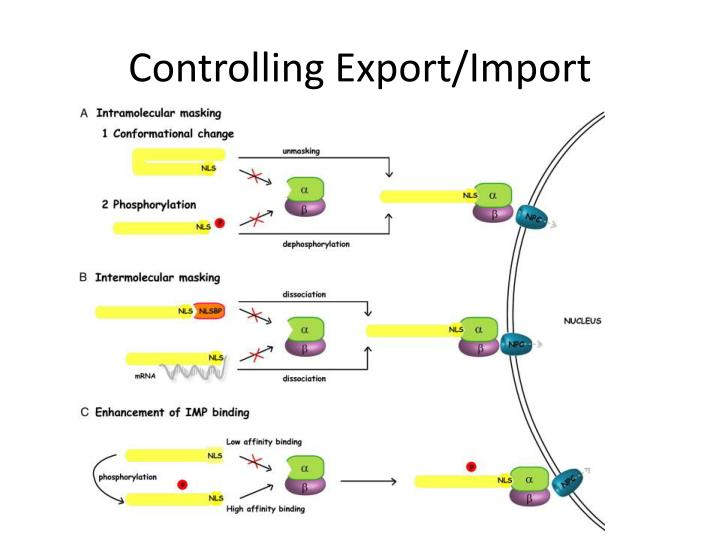 Controlling Export/Import