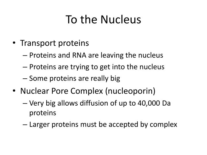 To the Nucleus